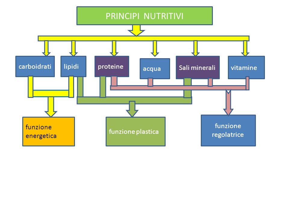 carboidratilipidiproteine acqua Sali mineralivitamine funzione energetica funzione plastica funzione regolatrice PRINCIPI NUTRITIVI
