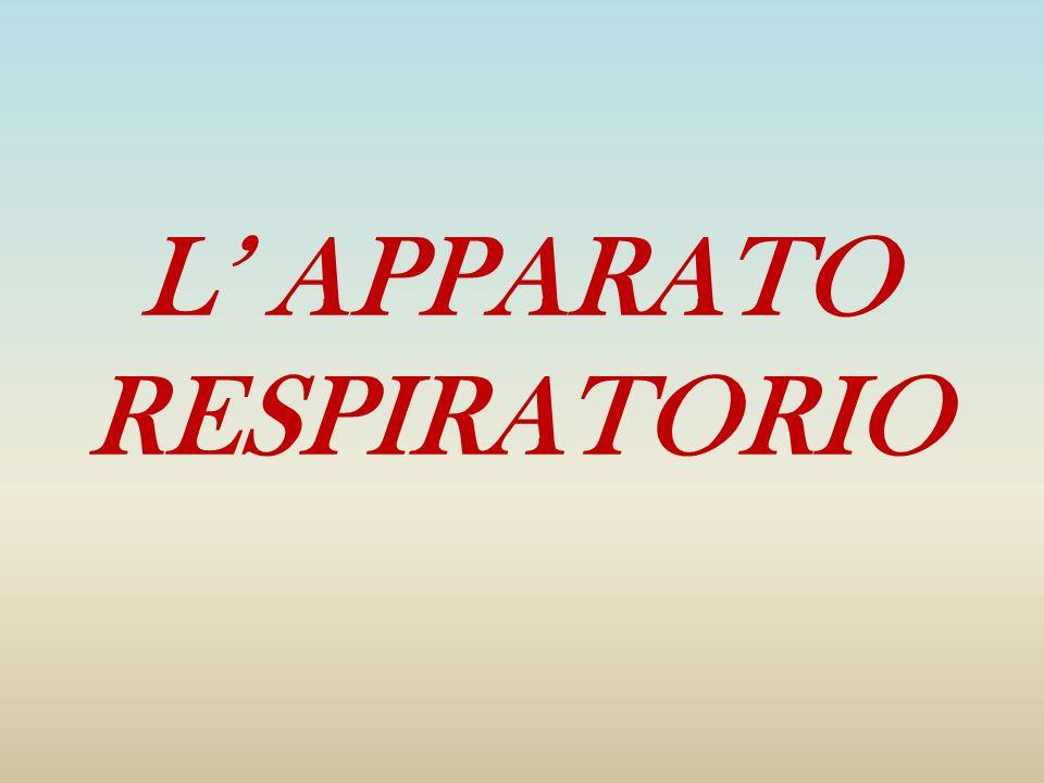 L APPARATO RESPIRATORIO