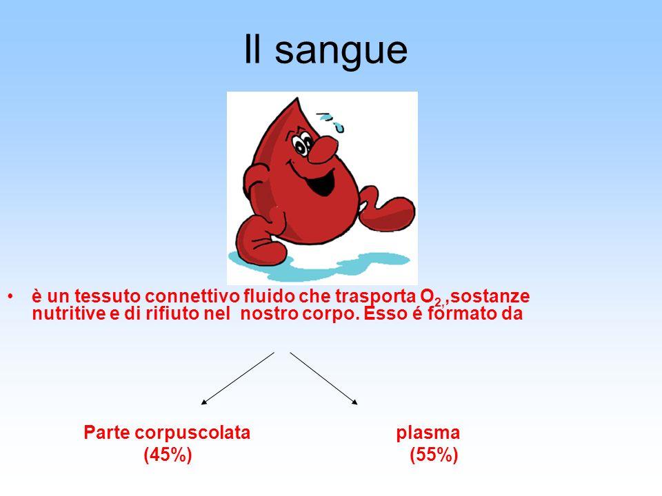 Parte corpuscolata del sangue Globuli rossi ( emazie-eritrociti ) Cellule anucleate - contengono lHb, una proteina che lega ossigeno e anidride carbonica (prodotti da midollo osseo rosso, distrutti da milza e fegato) Globuli bianchi (leucociti) dotati della capacità di muoversi, escono dal circolo sanguigno per difendere lorganismo da batteri e virus Piastrine (trombociti) permetto- no la coagulazione del sangue