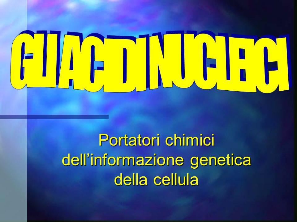 Portatori chimici dellinformazione genetica della cellula