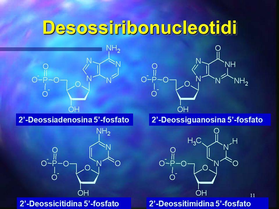 11 DesossiribonucleotidiDesossiribonucleotidi 2-Deossiadenosina 5-fosfato 2-Deossicitidina 5-fosfato2-Deossitimidina 5-fosfato 2-Deossiguanosina 5-fos