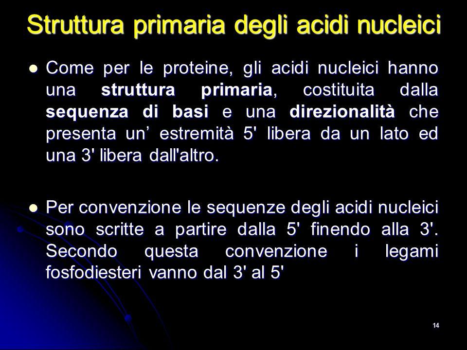 14 Struttura primaria degli acidi nucleici Come per le proteine, gli acidi nucleici hanno una struttura primaria, costituita dalla sequenza di basi e