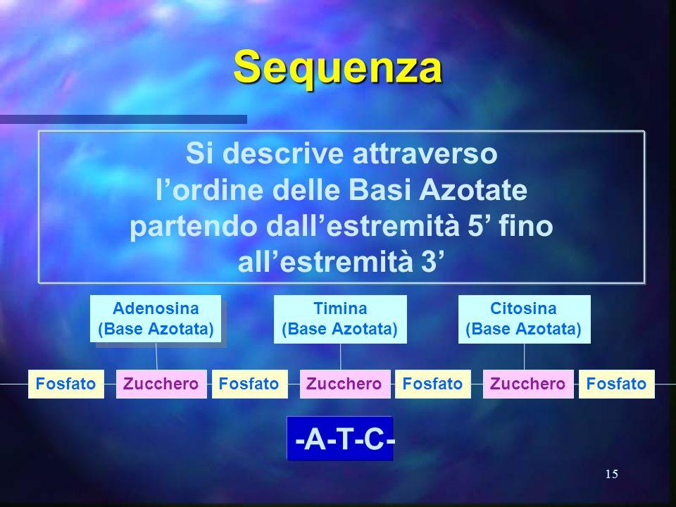 15 Sequenza Si descrive attraverso lordine delle Basi Azotate partendo dallestremità 5 fino allestremità 3 Adenosina (Base Azotata) Adenosina (Base Az