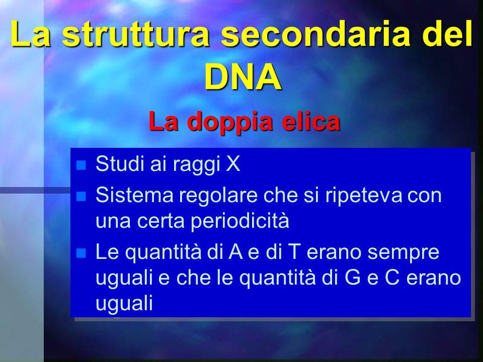 La struttura secondaria del DNA La doppia elica Studi ai raggi X Sistema regolare che si ripeteva con una certa periodicità Le quantità di A e di T er