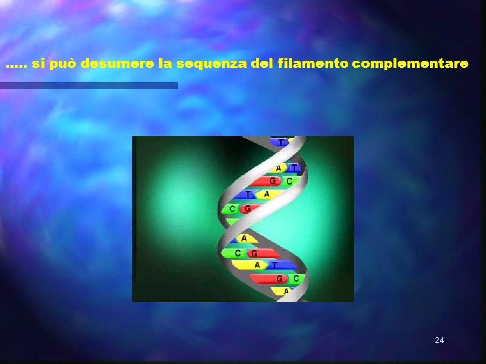 24 ….. si può desumere la sequenza del filamento complementare