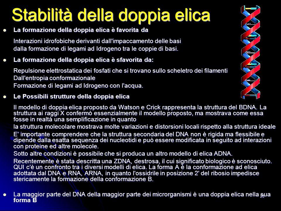 28 Stabilità della doppia elica La formazione della doppia elica è favorita da La formazione della doppia elica è favorita da Interazioni idrofobiche
