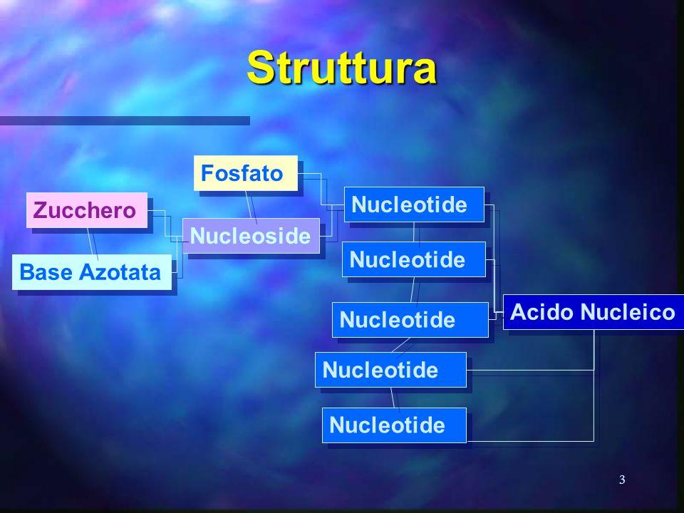 3 Struttura Acido Nucleico Zucchero Base Azotata Fosfato Nucleoside Nucleotide