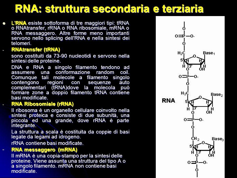 31 RNA: struttura secondaria e terziaria L'RNA esiste sottoforma di tre maggiori tipi: tRNA o RNAtransfer, rRNA o RNA ribosomiale, mRNA o RNA messagge