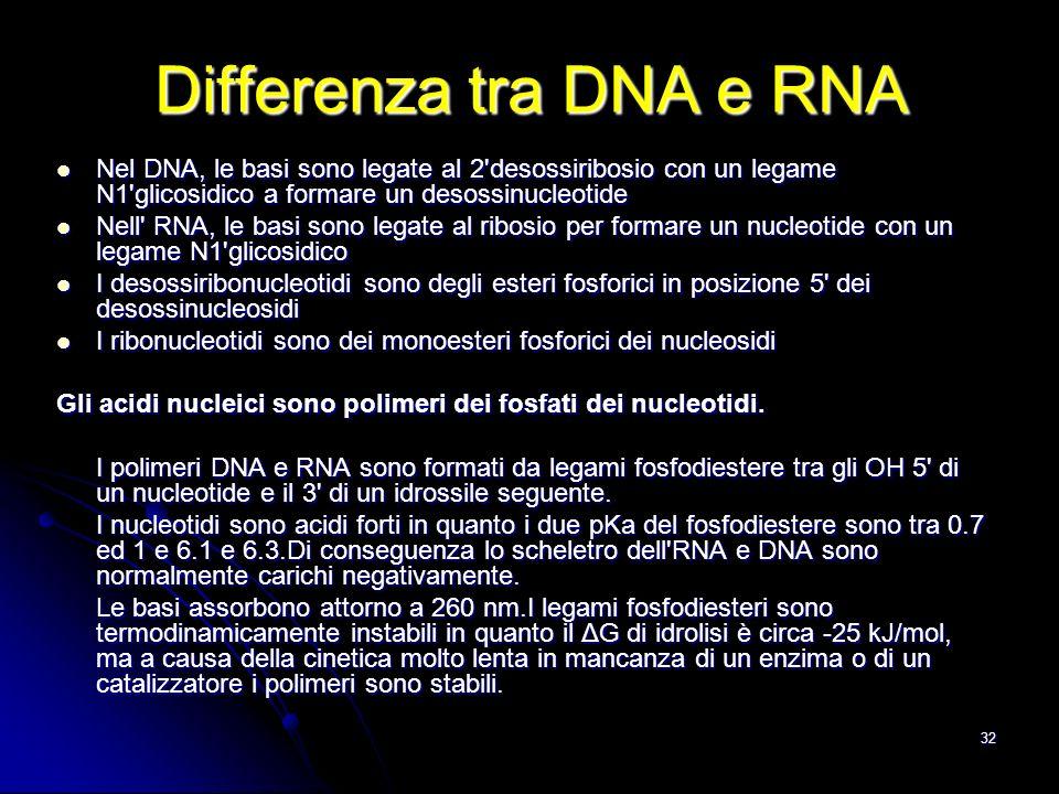 32 Nel DNA, le basi sono legate al 2'desossiribosio con un legame N1'glicosidico a formare un desossinucleotide Nel DNA, le basi sono legate al 2'deso