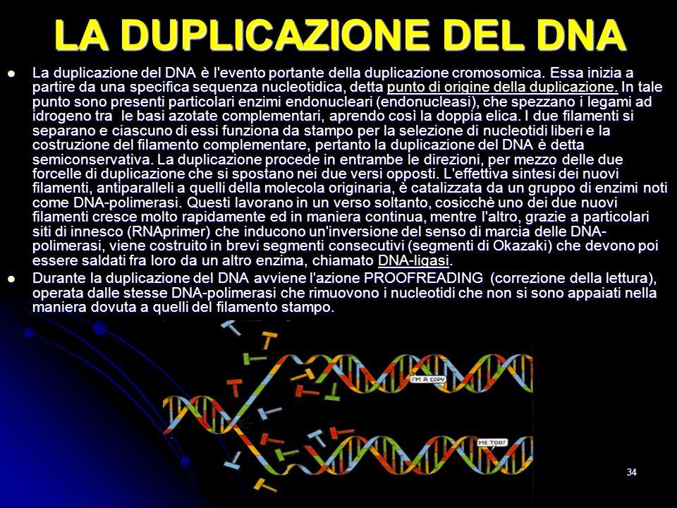 34 LA DUPLICAZIONE DEL DNA La duplicazione del DNA è l'evento portante della duplicazione cromosomica. Essa inizia a partire da una specifica sequenza