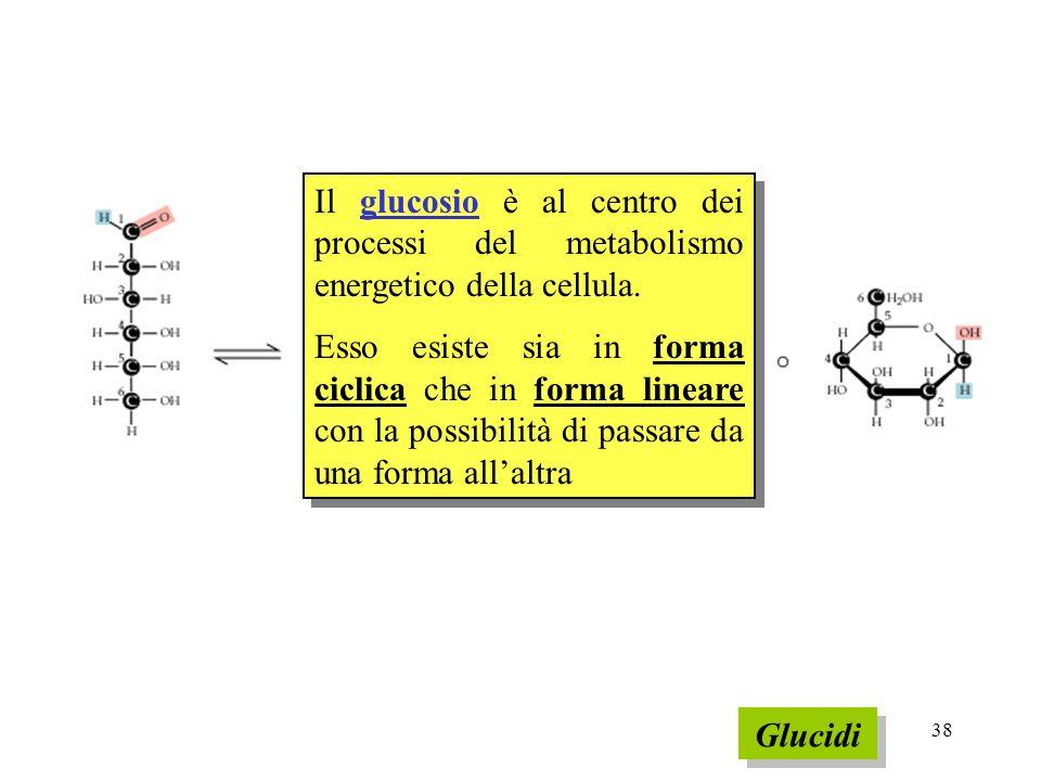 38 Glucidi Il glucosio è al centro dei processi del metabolismo energetico della cellula. Esso esiste sia in forma ciclica che in forma lineare con la