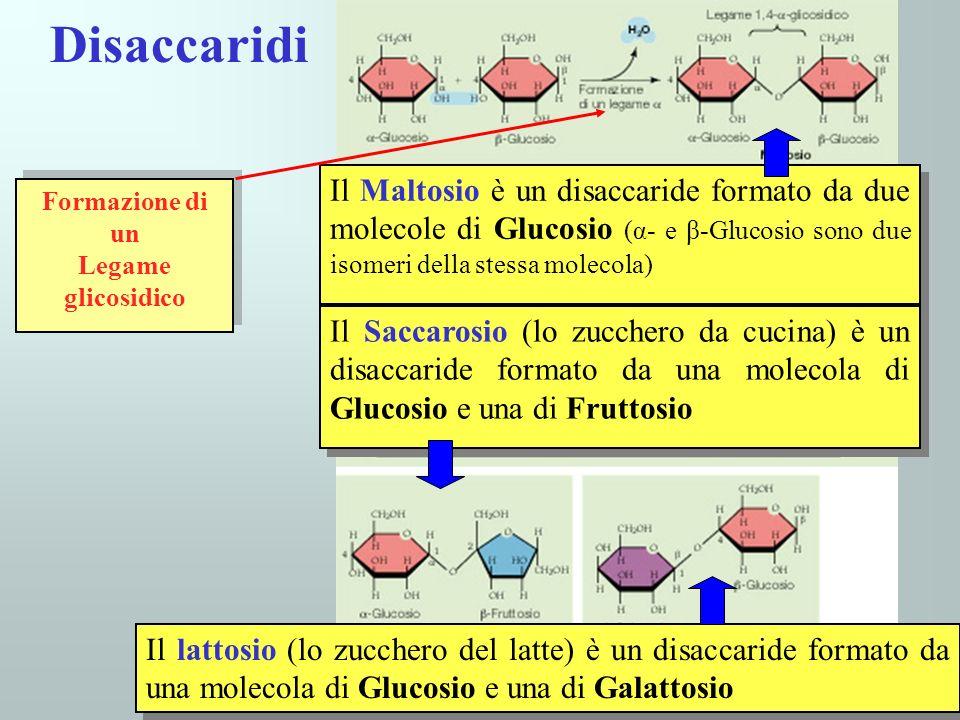 39 Disaccaridi Il Maltosio è un disaccaride formato da due molecole di Glucosio (α- e β-Glucosio sono due isomeri della stessa molecola) Il Saccarosio