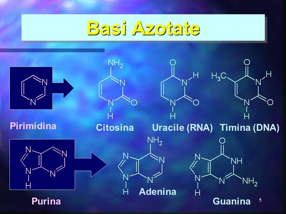 5 Basi Azotate Citosina Adenina Uracile (RNA) Guanina Timina (DNA) Pirimidina Purina