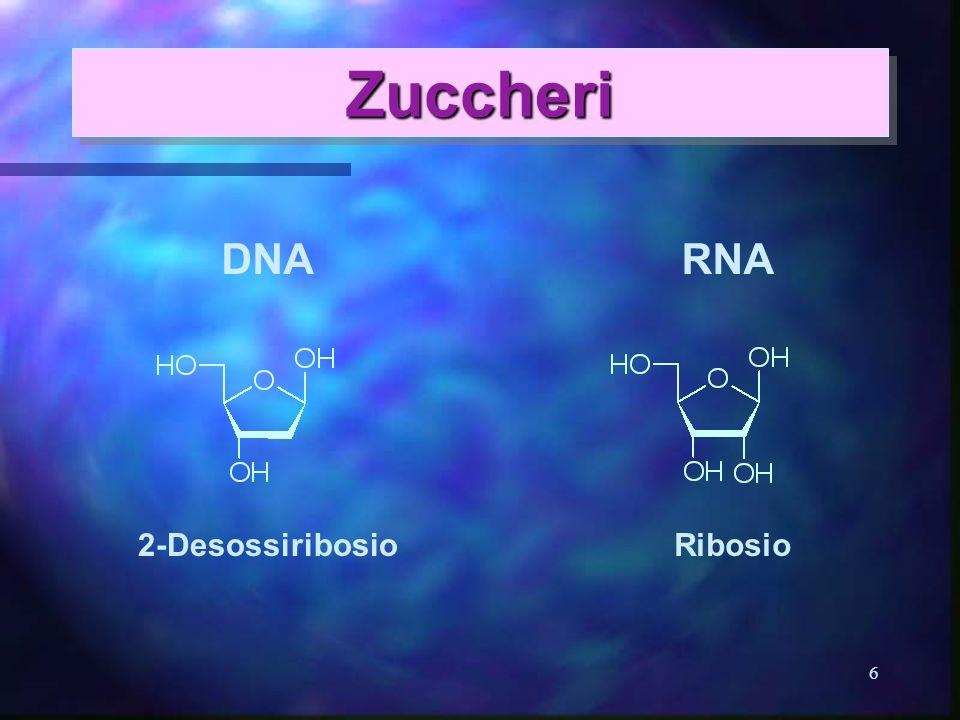 6 ZuccheriZuccheri Ribosio2-Desossiribosio DNARNA