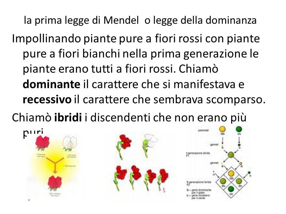 la prima legge di Mendel o legge della dominanza Impollinando piante pure a fiori rossi con piante pure a fiori bianchi nella prima generazione le pia
