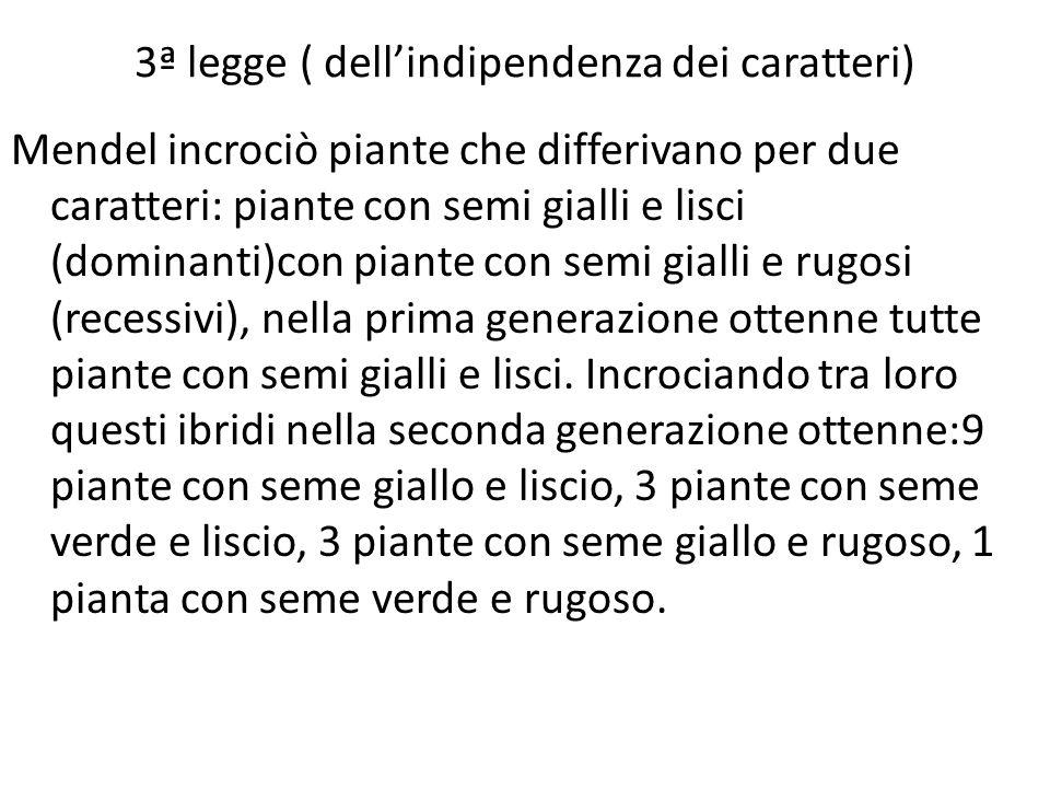 3ª legge ( dellindipendenza dei caratteri) Mendel incrociò piante che differivano per due caratteri: piante con semi gialli e lisci (dominanti)con pia