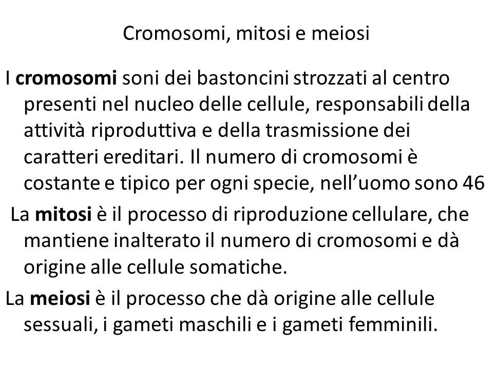 Cromosomi, mitosi e meiosi I cromosomi soni dei bastoncini strozzati al centro presenti nel nucleo delle cellule, responsabili della attività riprodut