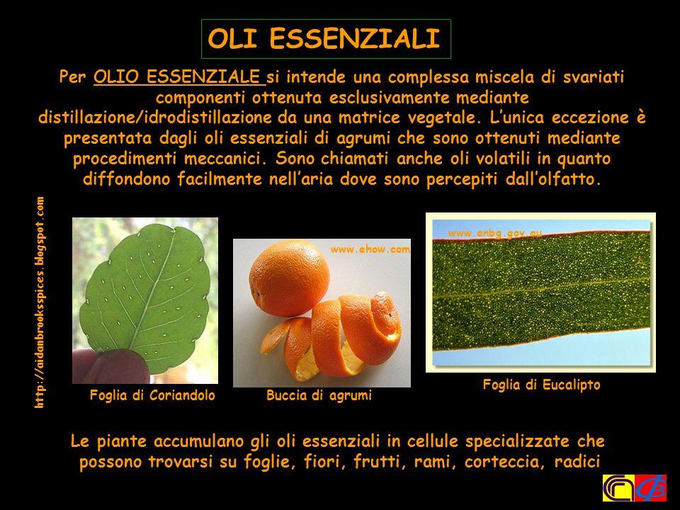 -Cariofillene Sesquiterpene idrocarburo
