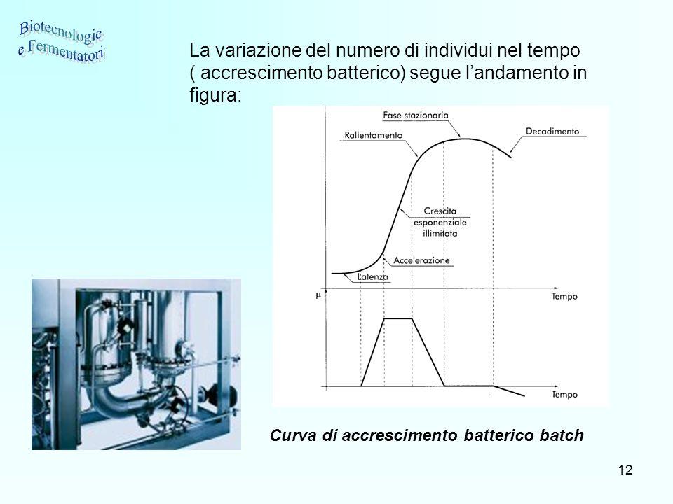 12 La variazione del numero di individui nel tempo ( accrescimento batterico) segue landamento in figura: Curva di accrescimento batterico batch