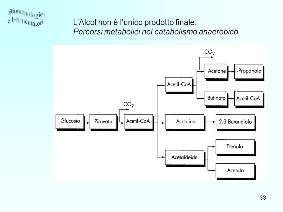 33 LAlcol non è lunico prodotto finale: Percorsi metabolici nel catabolismo anaerobico