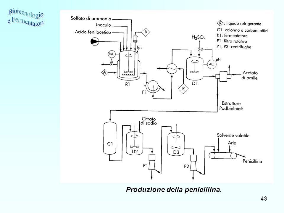 43 Produzione della penicillina.