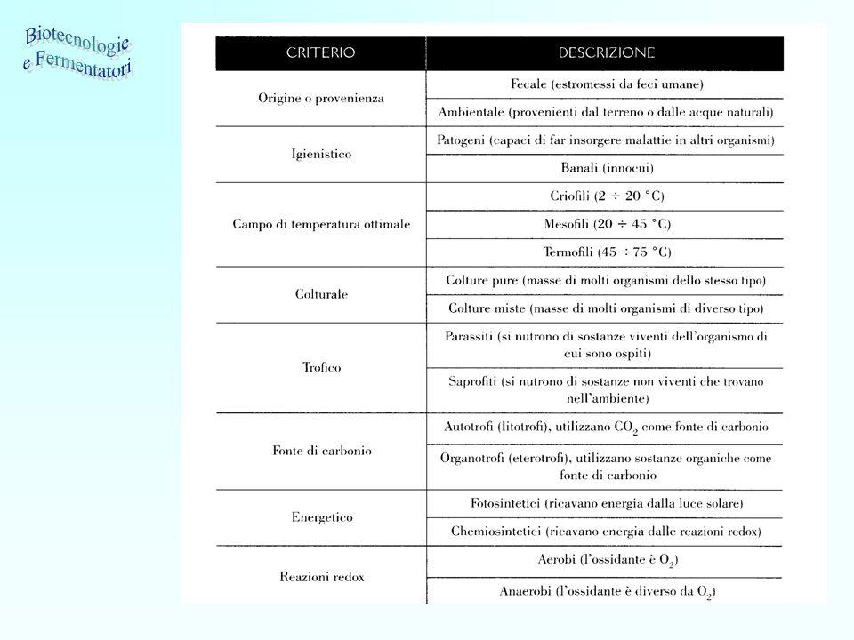 9 Alcune applicazioni degli enzimi nella produzione alimentare MercatoEnzimaScopo / Funzione Lattiero-casearioCaglio-(proteasi)Coagulante nella produzione del formaggio LattasiIdrolisi del lattosio per fornire prodotti caseari privi di lattosio.
