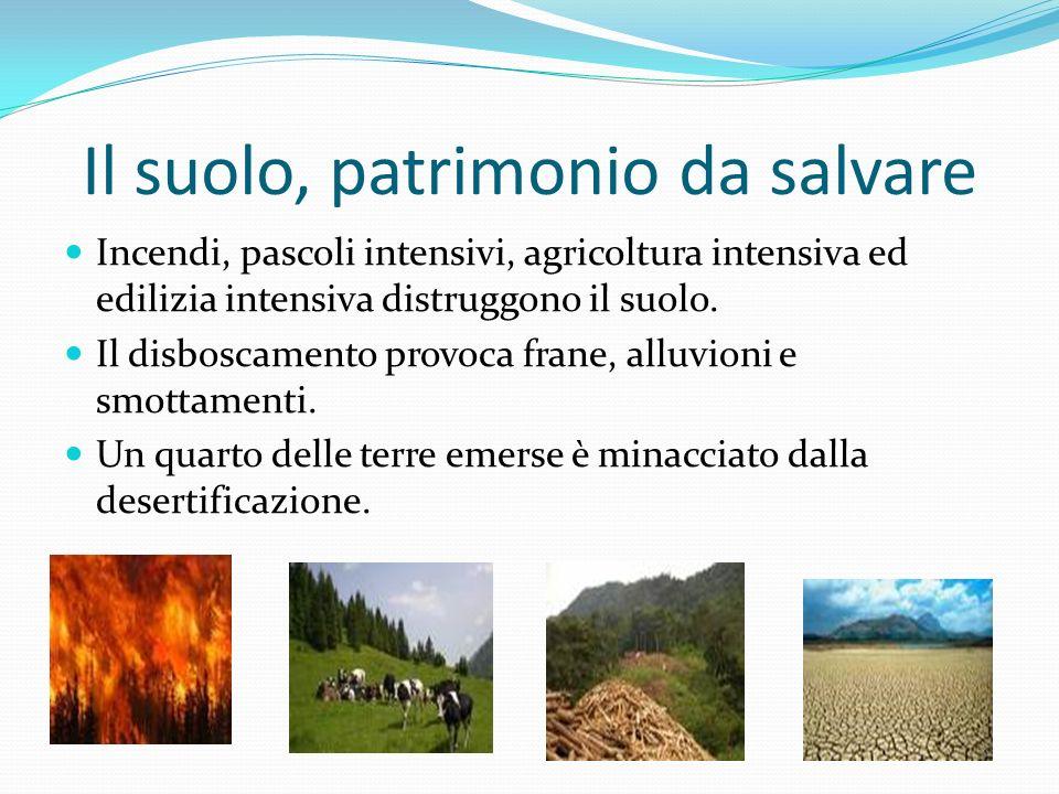 Il suolo, patrimonio da salvare Incendi, pascoli intensivi, agricoltura intensiva ed edilizia intensiva distruggono il suolo. Il disboscamento provoca