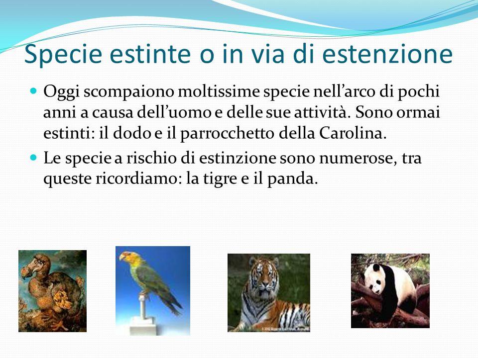 Specie estinte o in via di estenzione Oggi scompaiono moltissime specie nellarco di pochi anni a causa delluomo e delle sue attività. Sono ormai estin