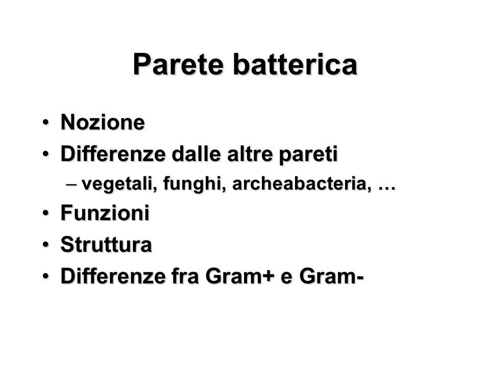 Parete batterica NozioneNozione Differenze dalle altre paretiDifferenze dalle altre pareti –vegetali, funghi, archeabacteria, … FunzioniFunzioni Strut