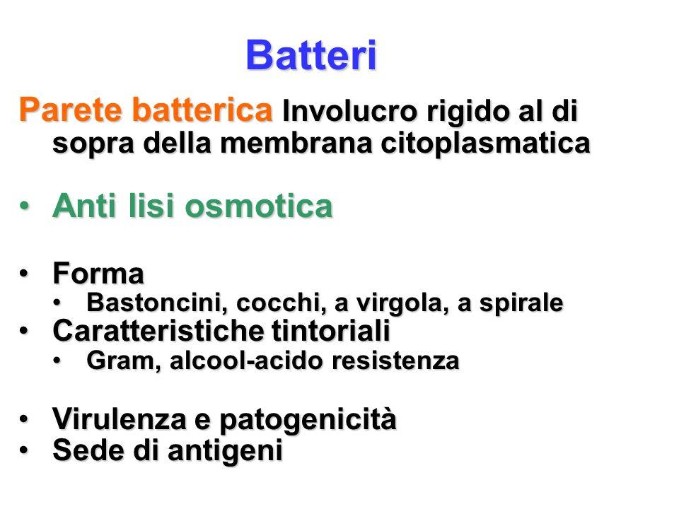 Batteri Parete batterica Involucro rigido al di sopra della membrana citoplasmatica Anti lisi osmoticaAnti lisi osmotica FormaForma Bastoncini, cocchi