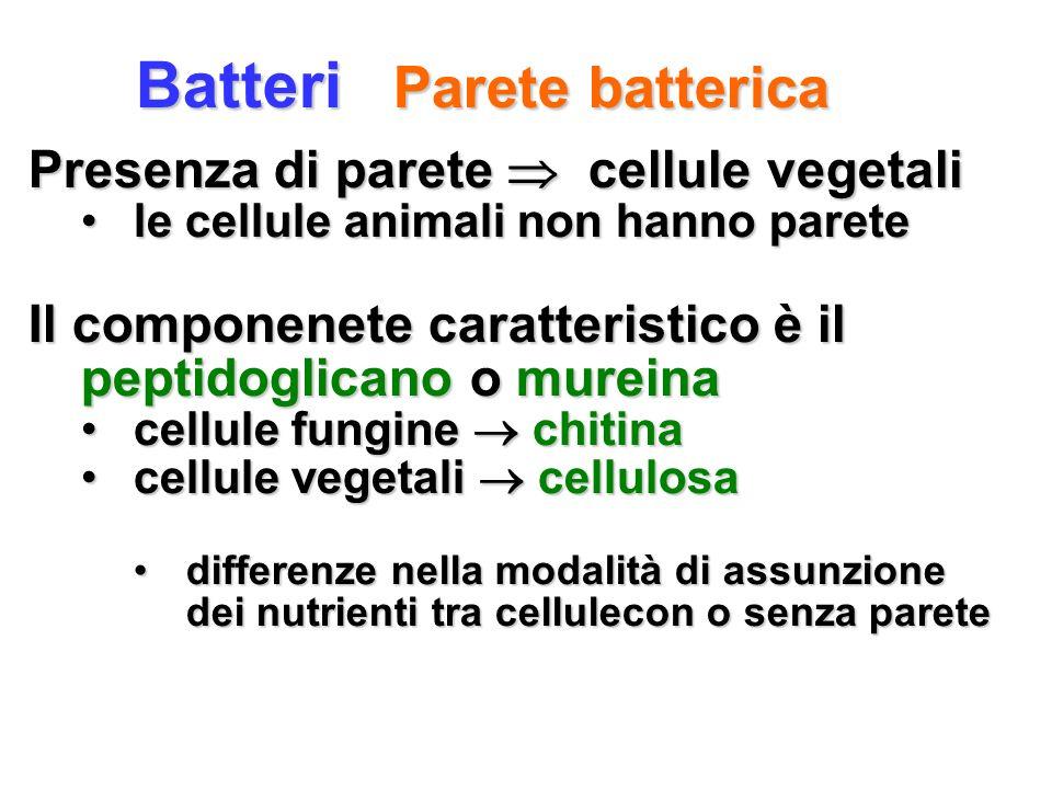 Batteri Parete batterica Presenza di parete cellule vegetali le cellule animali non hanno paretele cellule animali non hanno parete Il componenete car