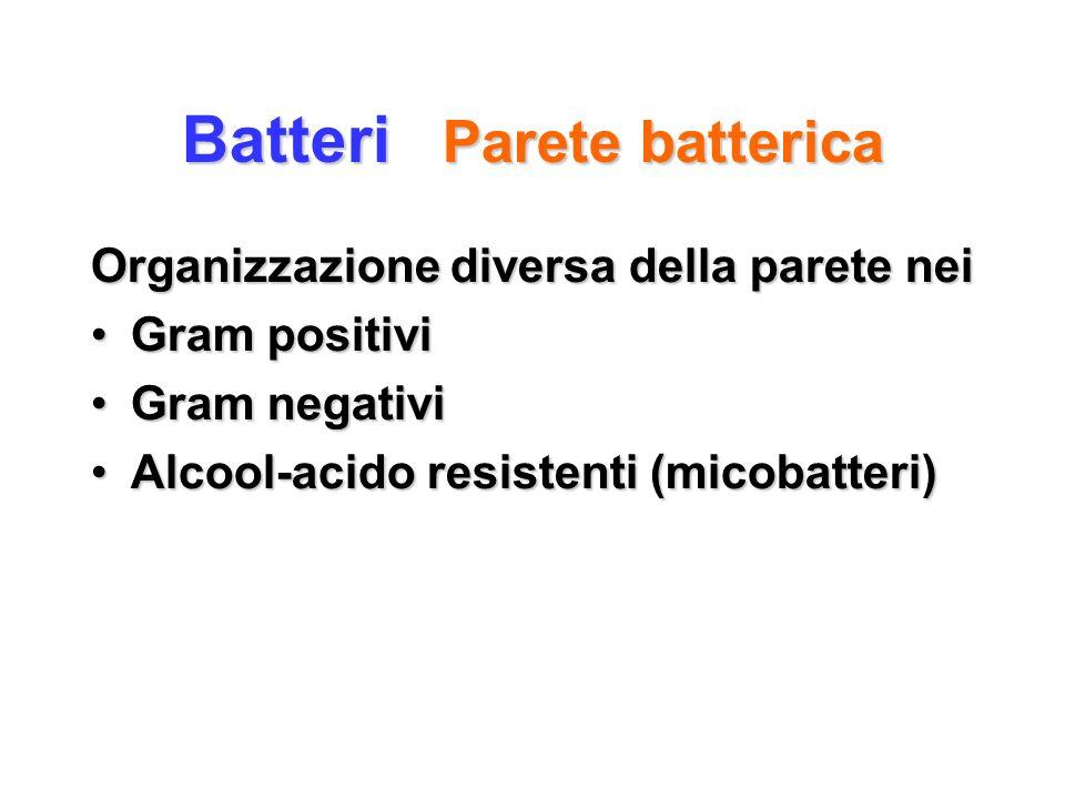 Batteri Parete batterica Organizzazione diversa della parete nei Gram positiviGram positivi Gram negativiGram negativi Alcool-acido resistenti (micoba