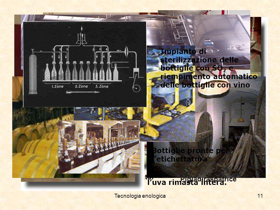 Tecnologia enologica11 TorchioPigiadiraspatrice Sgrondatoi Terminata la fermentazione si effettua la pigiatura e si torchia luva rimasta intera. Vasch