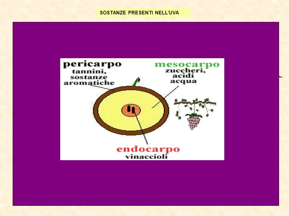 Tecnologia enologica4 I Il mosto 1.Mezzo nutritivo per soddisfare le esigenze di numerosi microrganismi Zuccheri monosaccaridi Composti azotati (ammoniaca, aminoacidi liberi e polipeptidi) Fosfati, solfati, composti del potassio del magnesio, del calcio ecc.