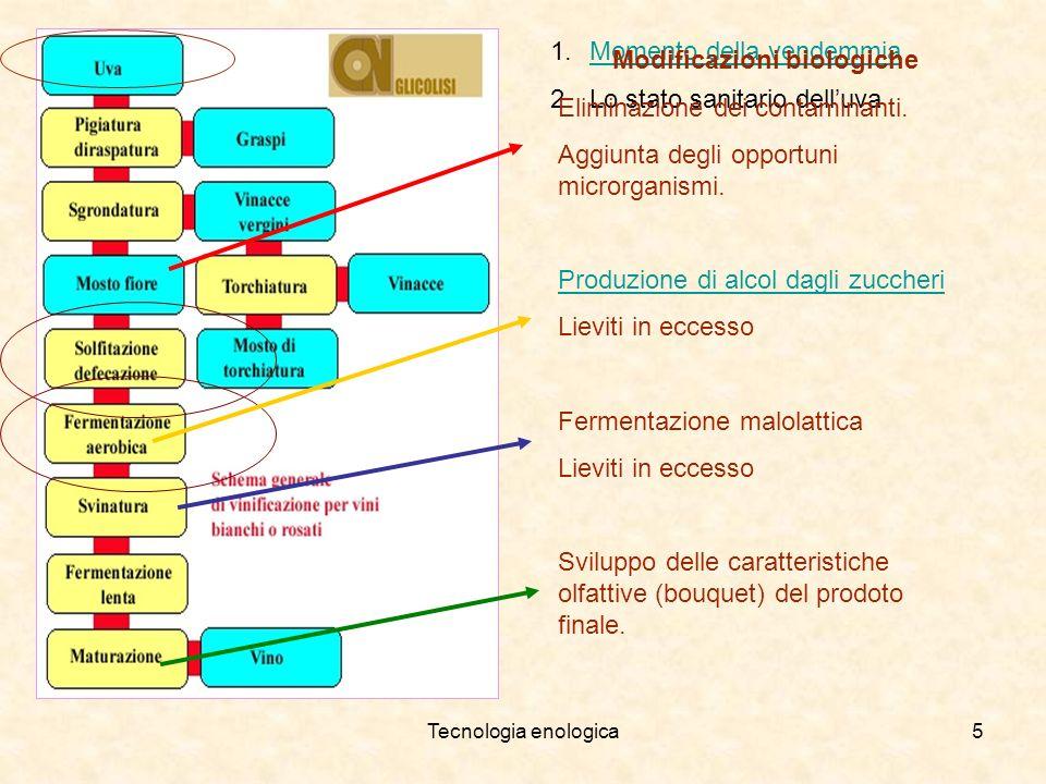 Tecnologia enologica5 1.MMomento della vendemmia 2.Lo stato sanitario delluva Modificazioni biologiche Eliminazione dei contaminanti. Aggiunta degli o
