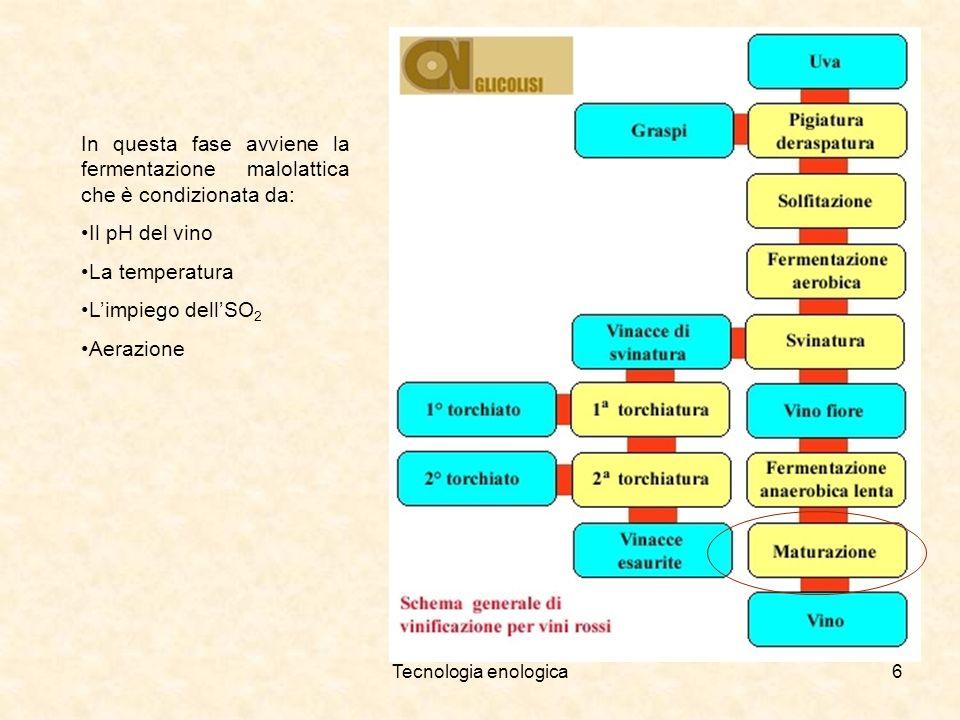 Tecnologia enologica6 In questa fase avviene la fermentazione malolattica che è condizionata da: Il pH del vino La temperatura Limpiego dellSO 2 Aeraz