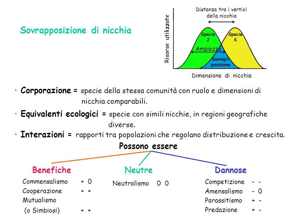 Sovrapposizione di nicchia Corporazione = specie della stessa comunità con ruolo e dimensioni di nicchia comparabili. Interazioni = rapporti tra popol