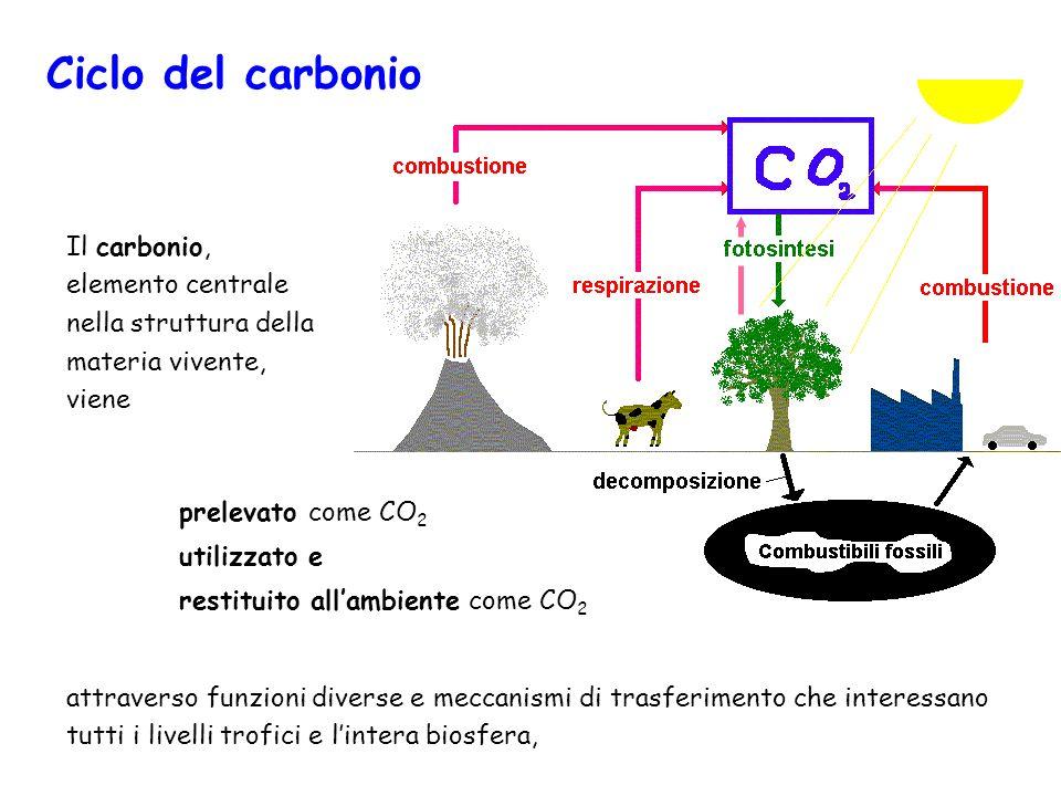 Il carbonio, elemento centrale nella struttura della materia vivente, viene attraverso funzioni diverse e meccanismi di trasferimento che interessano