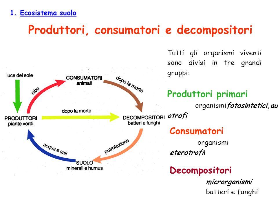 1. Ecosistema suolo Produttori, consumatori e decompositori Tutti gli organismi viventi sono divisi in tre grandi gruppi: Produttori primari organismi