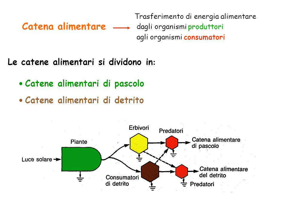 Catena alimentare Trasferimento di energia alimentare dagli organismi produttori agli organismi consumatori Catene alimentari di pascolo Catene alimen