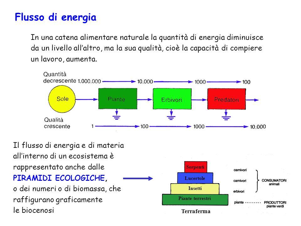 In una catena alimentare naturale la quantità di energia diminuisce da un livello allaltro, ma la sua qualità, cioè la capacità di compiere un lavoro,
