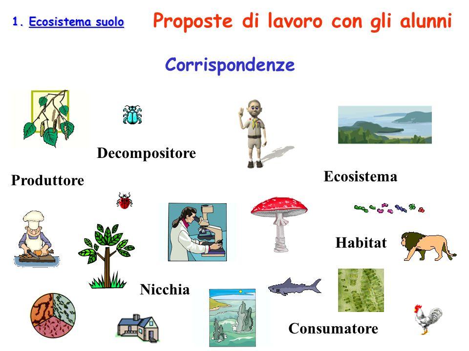 Corrispondenze Habitat Nicchia Ecosistema Produttore Consumatore Decompositore 1. Ecosistema suolo Proposte di lavoro con gli alunni