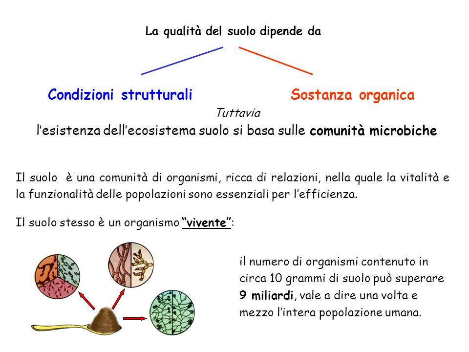 Il suolo è una comunità di organismi, ricca di relazioni, nella quale la vitalità e la funzionalità delle popolazioni sono essenziali per lefficienza.