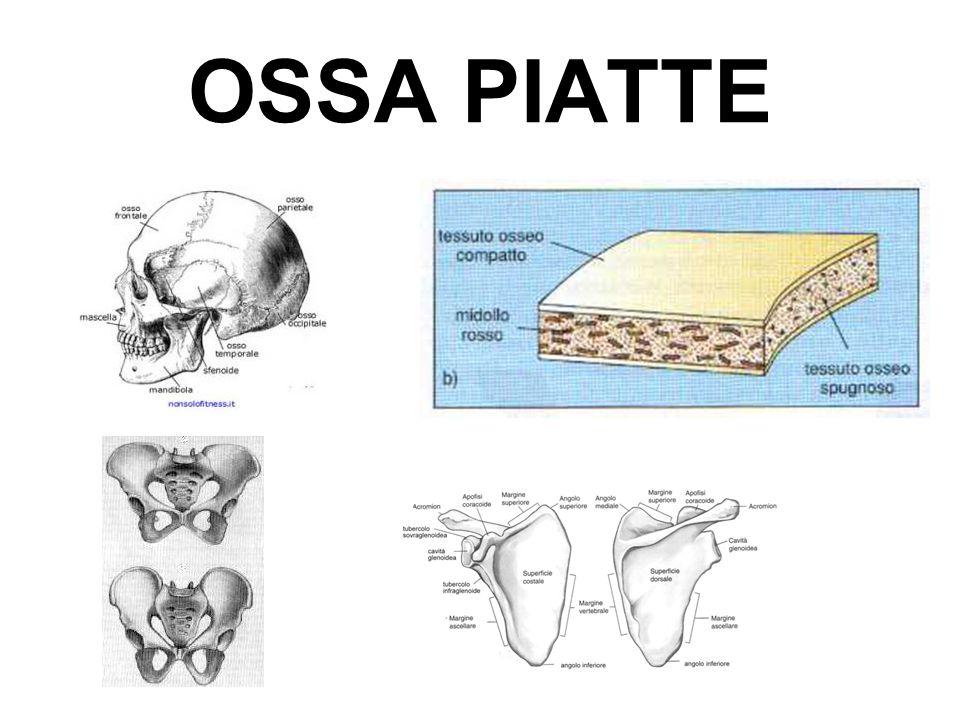 OSSA PIATTE
