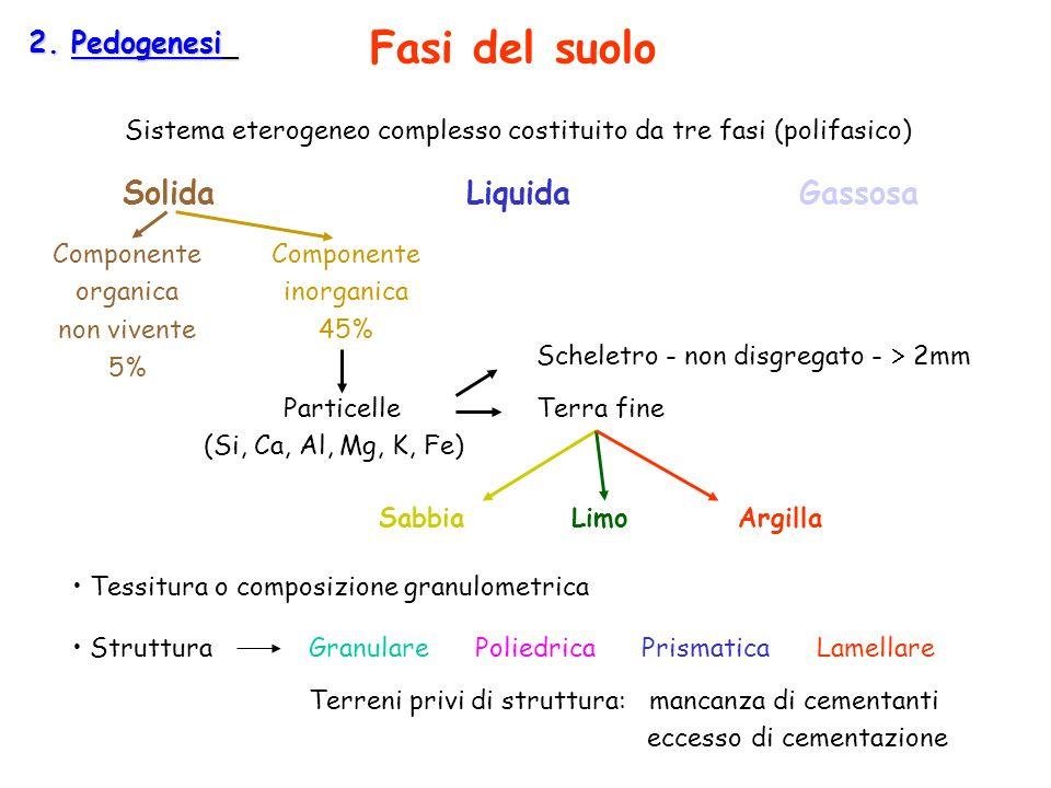 2. Pedogenesi Sistema eterogeneo complesso costituito da tre fasi (polifasico) SolidaLiquidaGassosa Componente organica non vivente 5% Componente inor