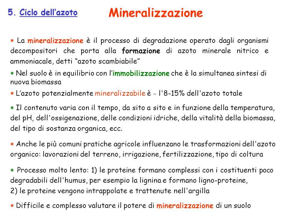 La mineralizzazione è il processo di degradazione operato dagli organismi decompositori che porta alla formazione di azoto minerale nitrico e ammoniac
