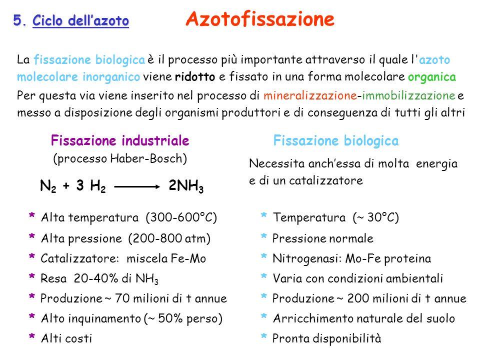5. Ciclo dellazoto La fissazione biologica è il processo più importante attraverso il quale l'azoto molecolare inorganico viene ridotto e fissato in u