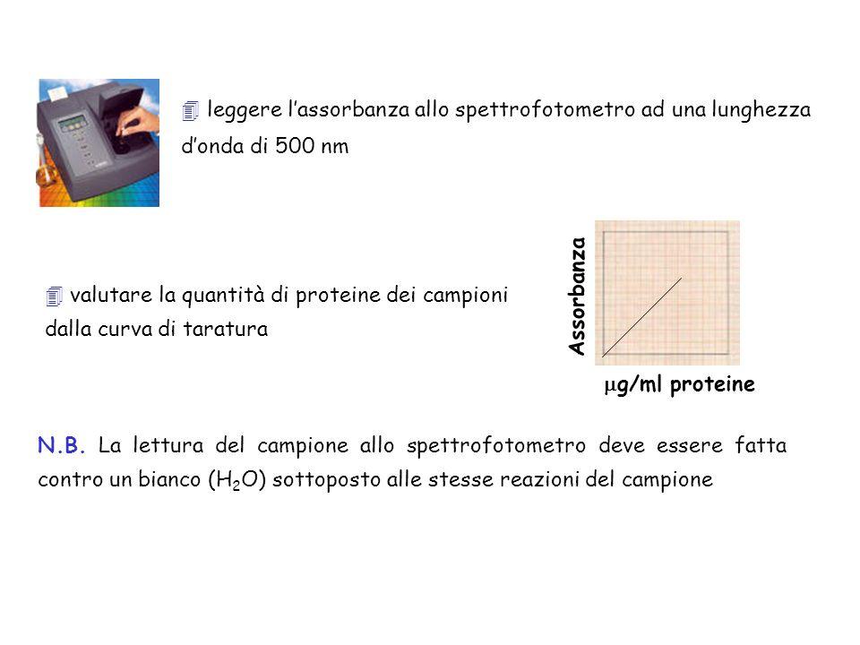 valutare la quantità di proteine dei campioni dalla curva di taratura N.B. La lettura del campione allo spettrofotometro deve essere fatta contro un b