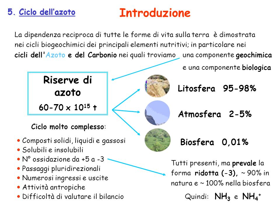 5. Ciclo dellazoto La dipendenza reciproca di tutte le forme di vita sulla terra è dimostrata nei cicli biogeochimici dei principali elementi nutritiv