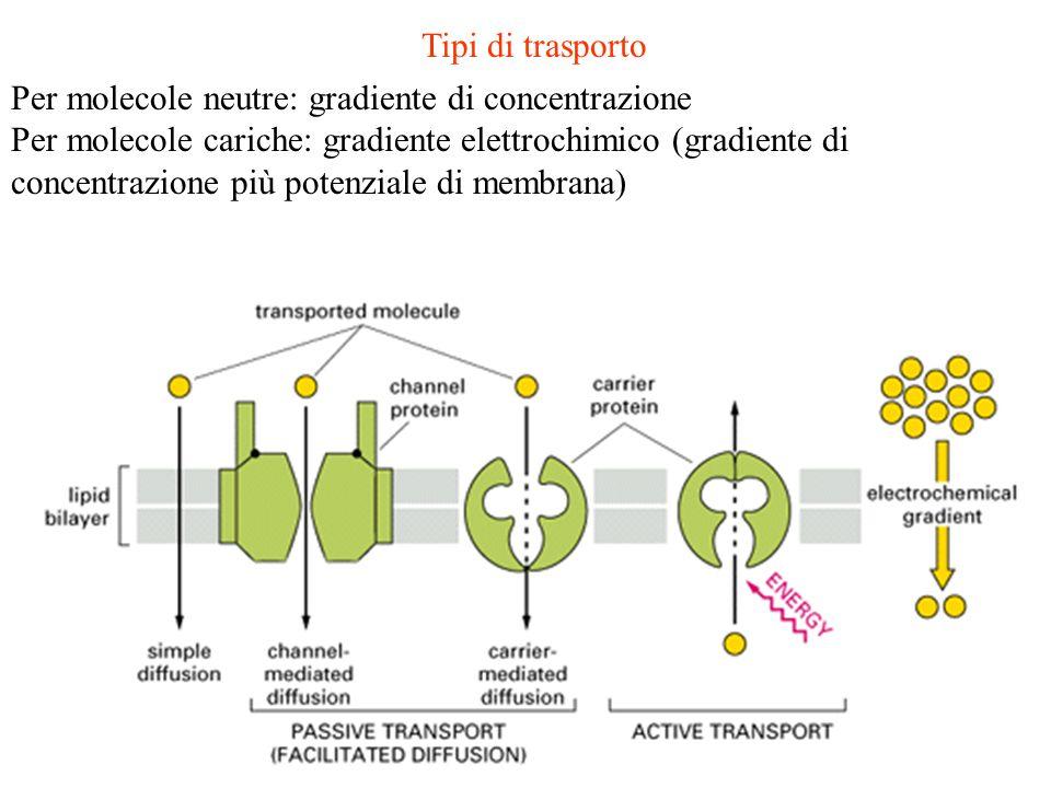 Tipi di trasporto Per molecole neutre: gradiente di concentrazione Per molecole cariche: gradiente elettrochimico (gradiente di concentrazione più pot